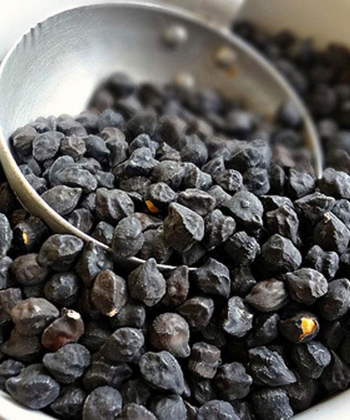 Cece nero della Murgia carsica